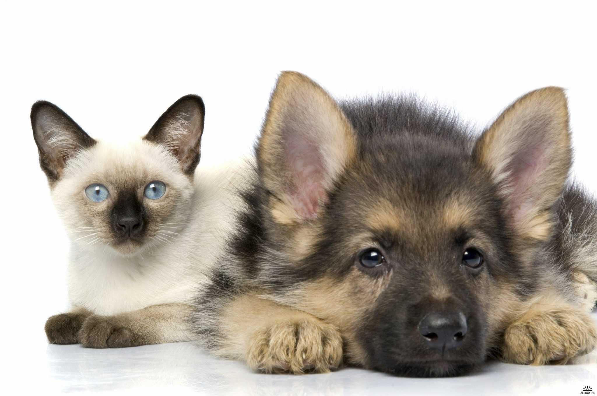 Как защитить домашних животных от паразитарных инфекций