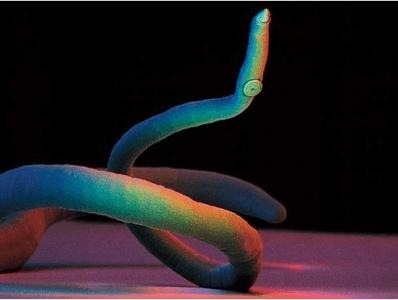 паразиты сосудах человека