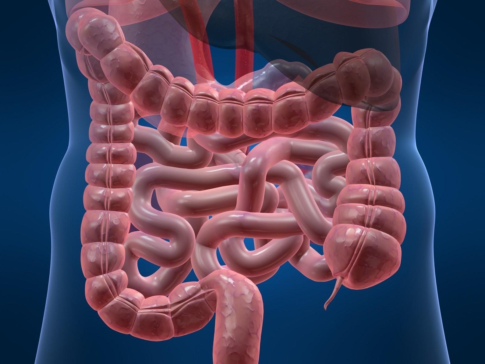 Чистка, детоксикация и восстановление кишечника
