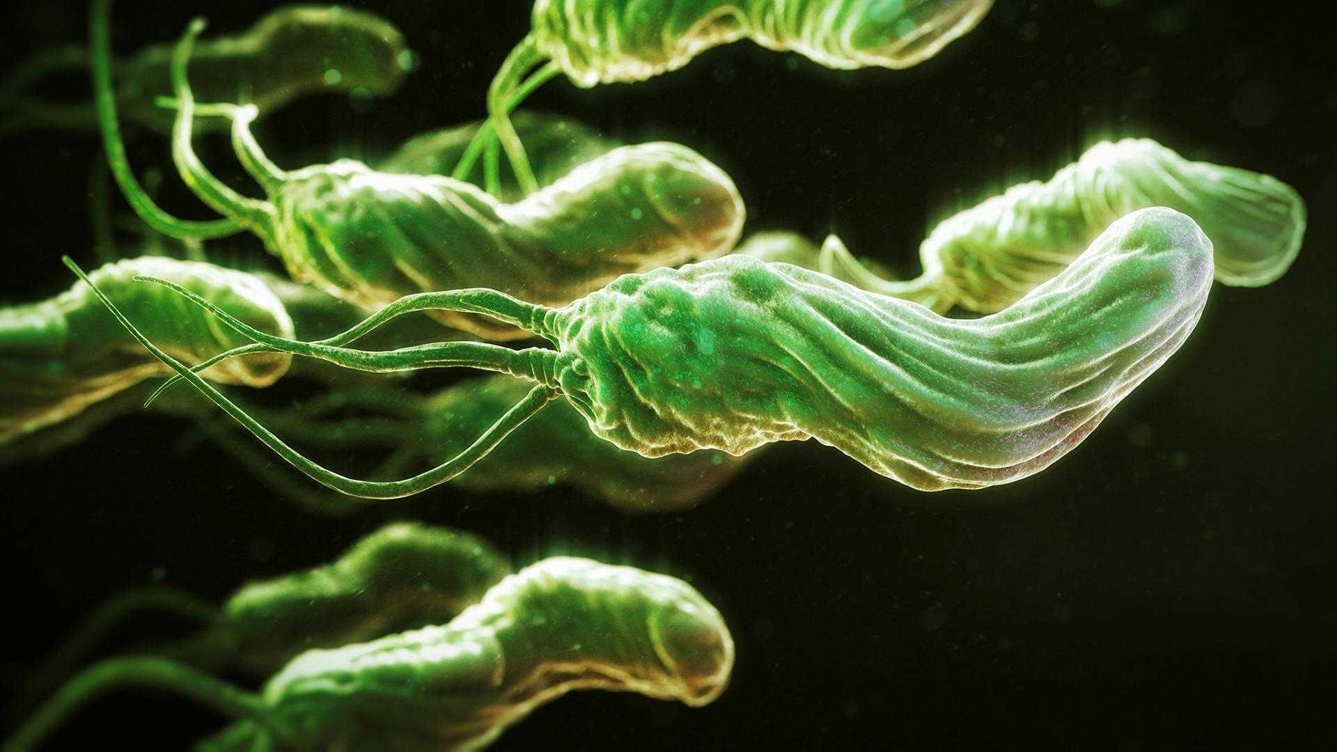Хеликобактер пилори может вызвать дефицит витамина B12 и привести к злокачественной анемии