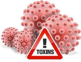Миф № 13: Продукты животного происхождения содержат многочисленные вредные токсины.