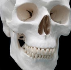 Зубы и кости