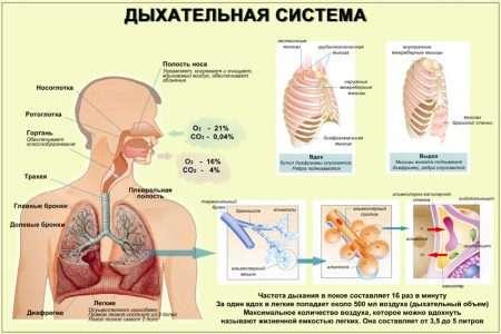 Болезни верхних дыхательных путей и связь их с другими заболеваниями
