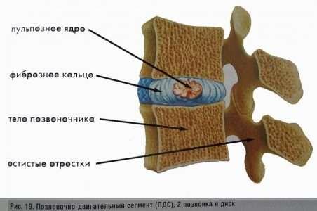 Позвоночно-двигательный сегмент (ПДС)
