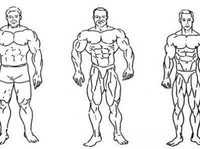 Диета для представителей эндоморфического типа телосложения