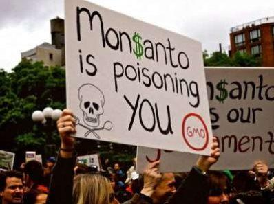 Monsanto принадлежит фармацевтам, а гербициды обеспечивают доходность от ГМО-семян