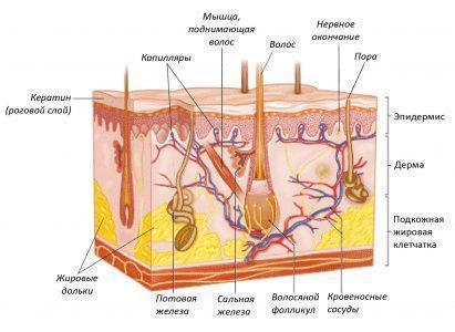 Сперма на дерме 5 фотография