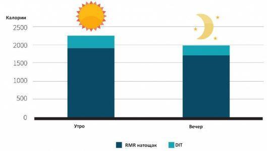 Рис. 3. Разница между утренним и вечерним метаболизмом.