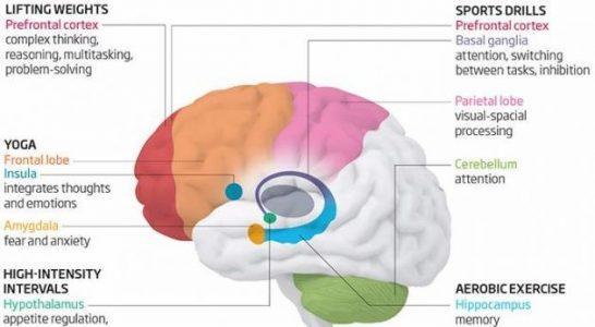 Влияние различных типов нагрузок на наш мозг
