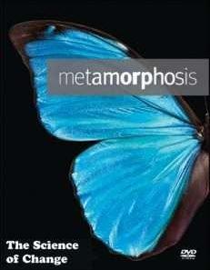 Искусство перевоплощения - метаморфоз