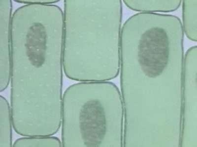 Невидимая жизнь. Введение в микробиологию. Полная подборка. 11 серий