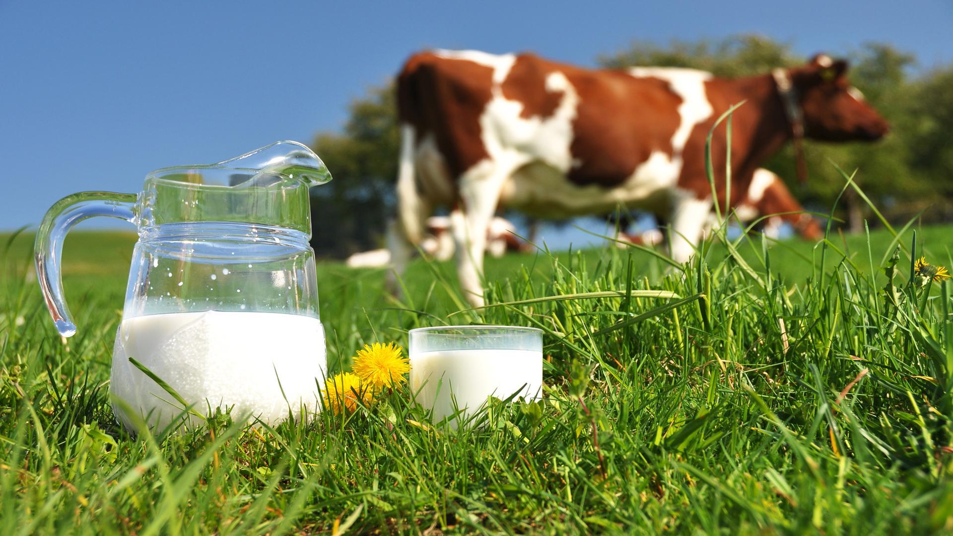 Вальтер Вайс - Вредное молоко