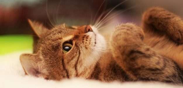 Урчание кошек поможет быть здоровым
