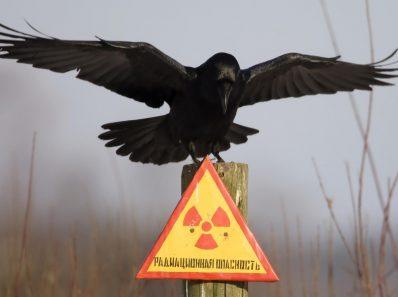 Радиация и Жизнь