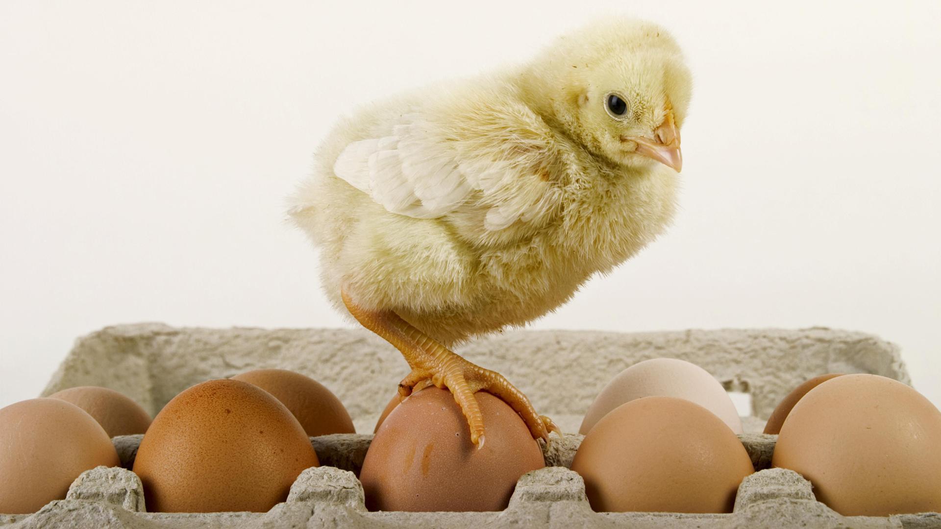 Нужны ли в рационе питания яйца?