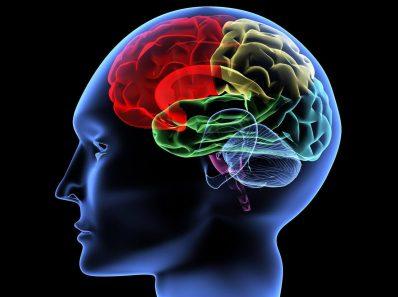 На что способен человеческий мозг?