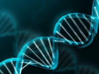 Роль генетики во время тренировок