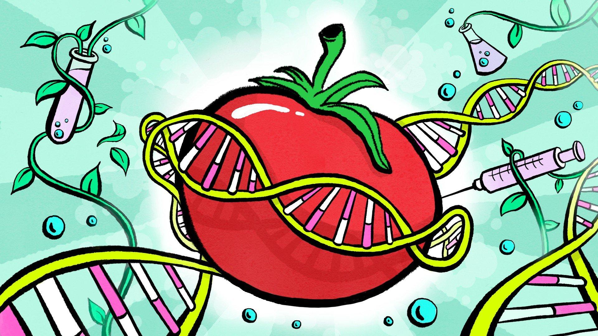 7 мифов о ГМО, о которых давно пора забыть