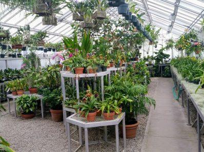 Комнатные растения, от которых лучше избавиться, если у вас есть маленькие дети