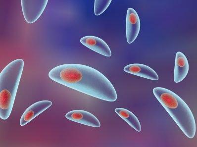 Паразиты в человеке. 10 самых популярных червей, которые живут внутри человеческого тела