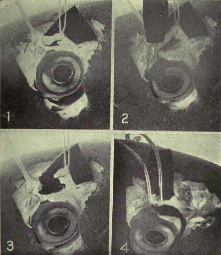Рисунок 5. Демонстрация, на примере глаза карпа, того, что верхняя косая мышца играет значимую роль в процессе аккомодации. №1 – Верхняя косая мышца приподнята от глазного яблока с помощью двух нитей и ретиноскоп показывает отсутствие аномалий рефракции. №2 – Стимуляция электрическим током приводит к возникновению аккомодации, как определил ретиноскоп. №3 – Мышца была разрезана. Стимуляцией глазного яблока электрическим током не удалось воспроизвести аккомодацию. №4 – Разрезанная мышца была вновь соединена путём скрепления нитей. Аккомодация возникает, как и прежде, в результате стимуляции электрическим током.