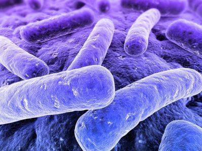 Теория Микробов Как Причины Болезней