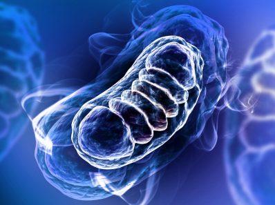 Как старение влияет на митохондрии в клетках мозга и способствует возникновению возрастных заболеваний