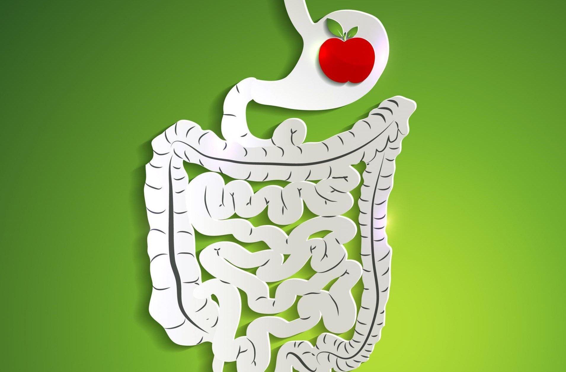 «Полезные кишечные бактерии» могут помочь в борьбе с ожирением