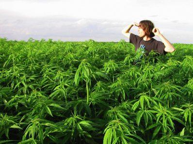 Что происходит с вашим телом, когда вы употребляете медицинскую марихуану?