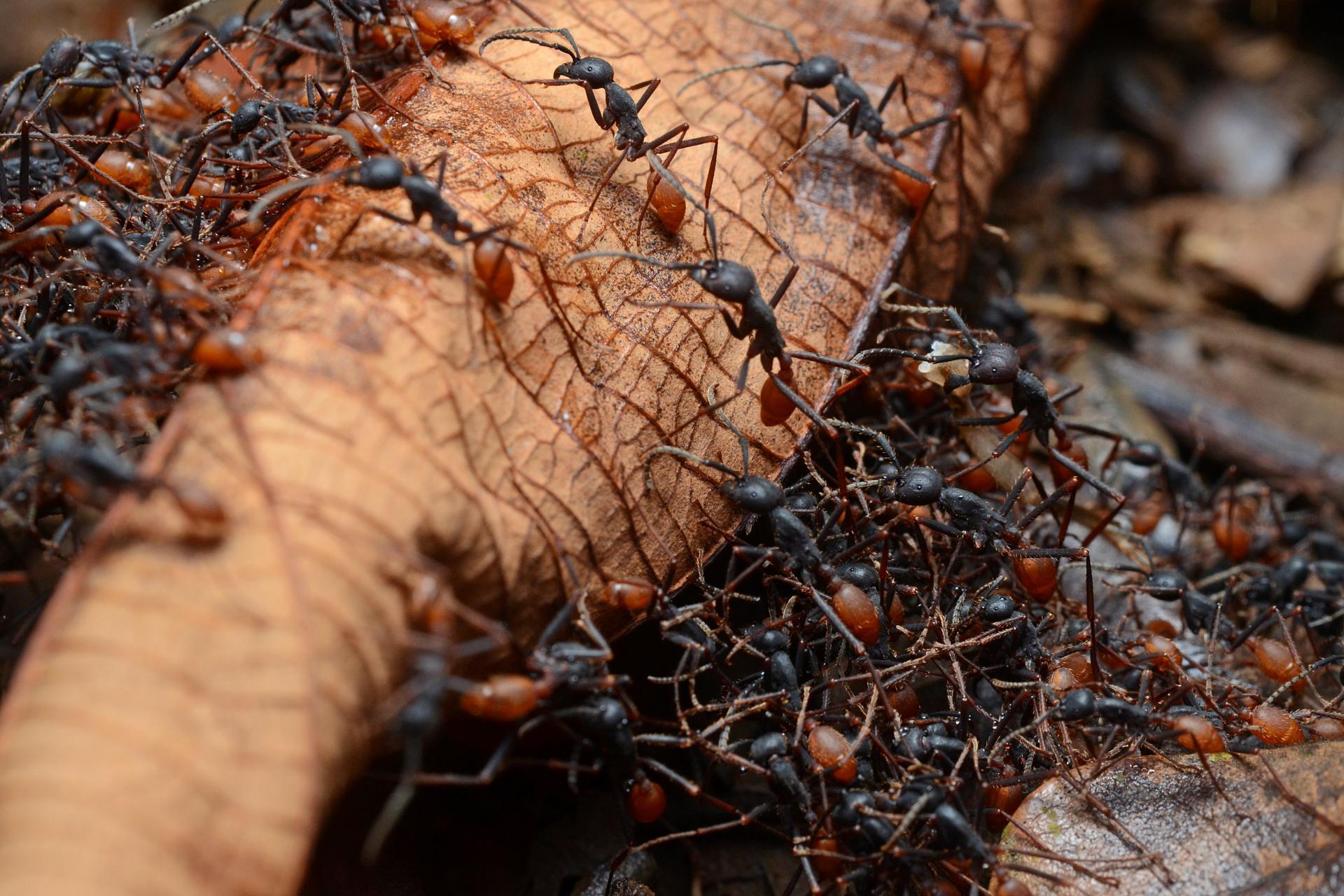 Устали от муравьев? Попробуйте эти естественные способы справиться с ними