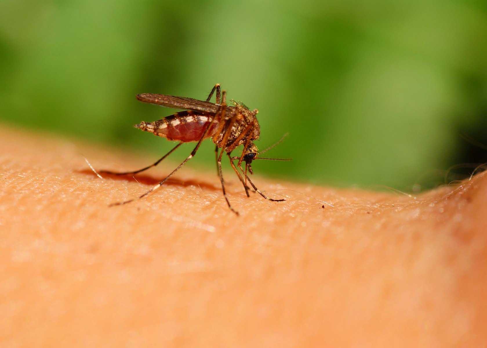 Как предотвратить и лечить укусы насекомых без агрессивных химикатов