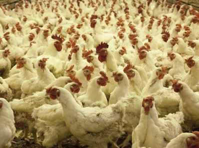 Эволюция птичьего гриппа и гонка, чтобы не отставать