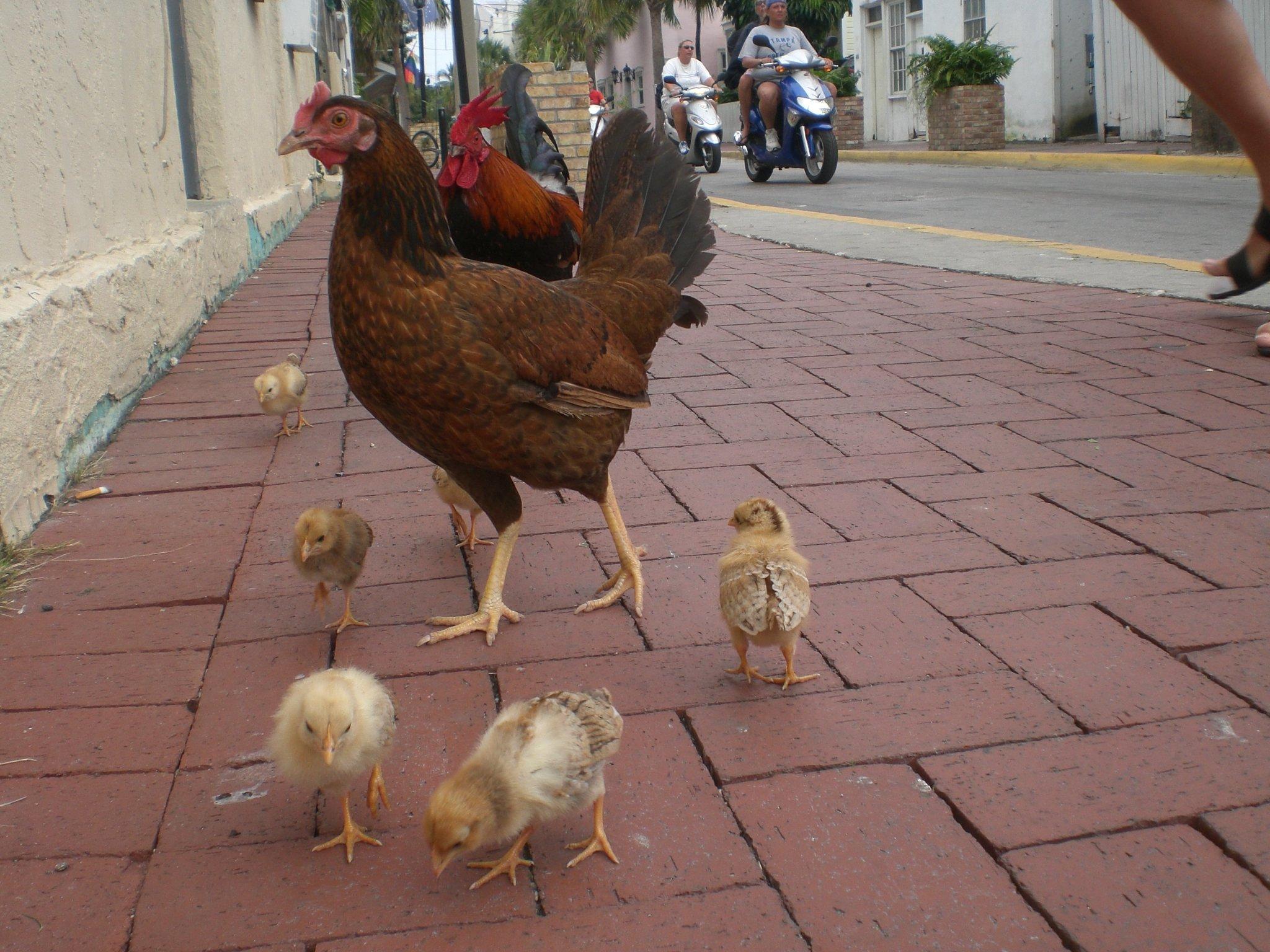 Новое исследование показывает, почему курица убивает вас, а насыщенные жиры - ваш друг