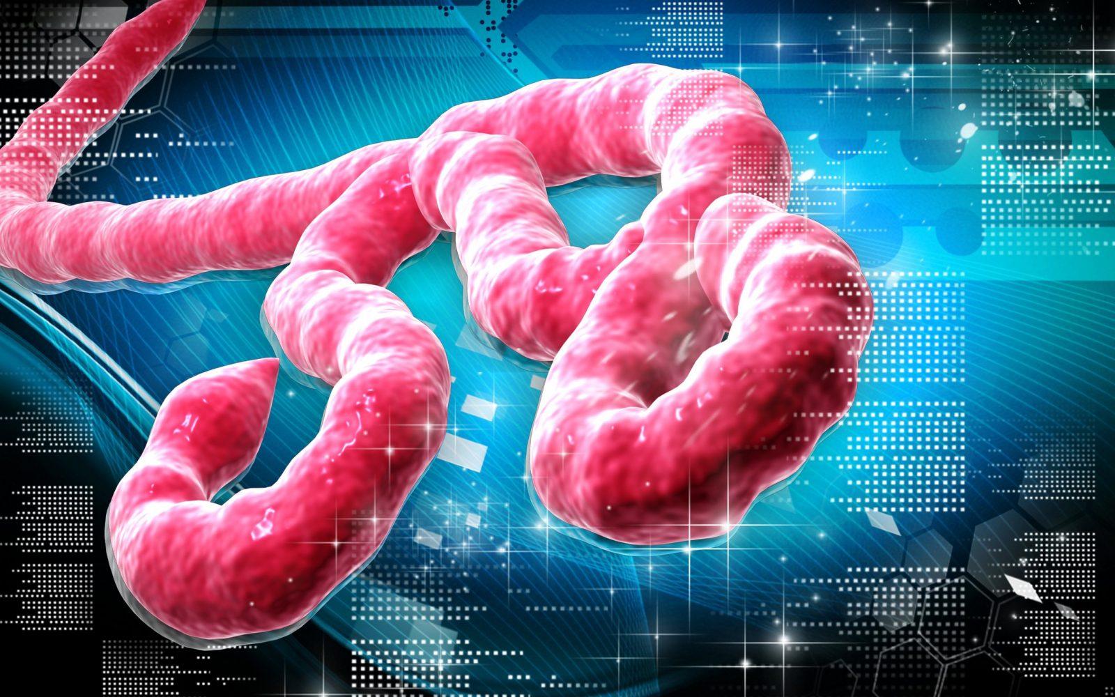 Вирус Эбола. Будет ли вспышка в России и Америке?