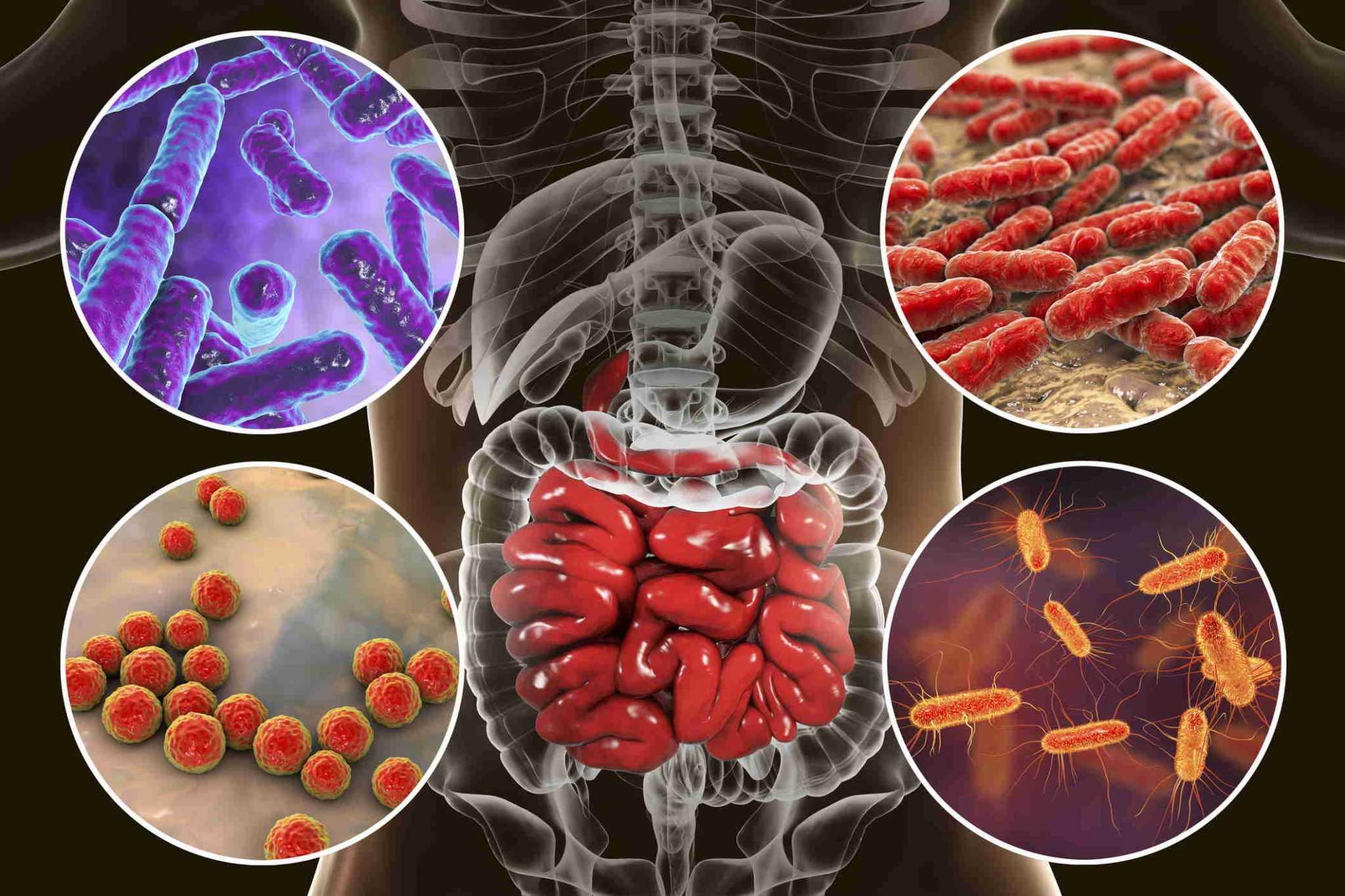 Как микробиом влияет на ваше здоровье