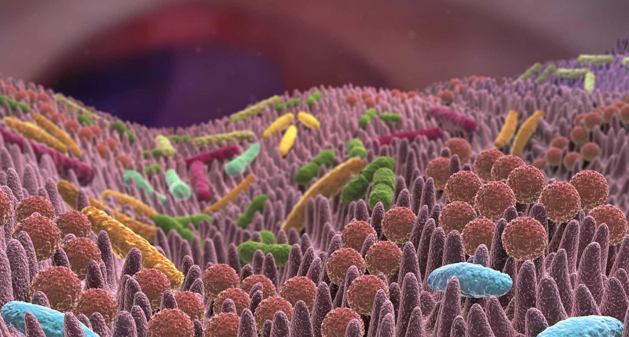 Микробиом кишечника может изменить правила игры в лечении рака