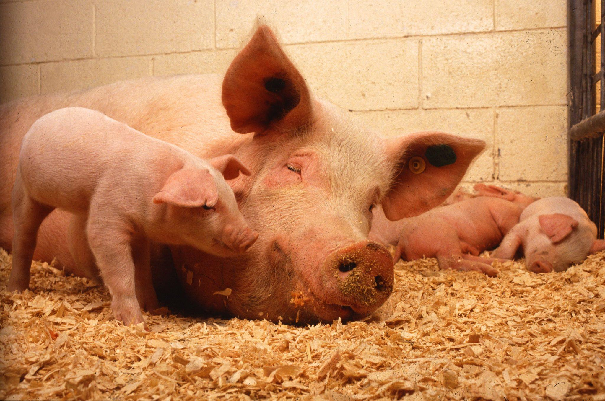 Еще несколько причин, по которым стоит избегать фальшивого мяса